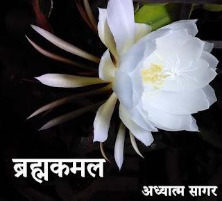 brahmacharya siddhi se brahmakamal ka prakatya