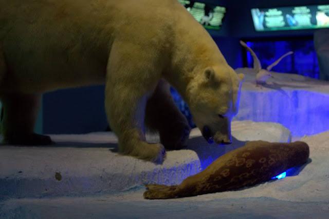 Diorama Berung Kutub Memangsa Anjing Laut - Museum Satwa Jatim Pak #16