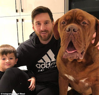 Playtime!!!  Barcelona star Lionel Messi relaxes with his human-sized dog at home (Photo