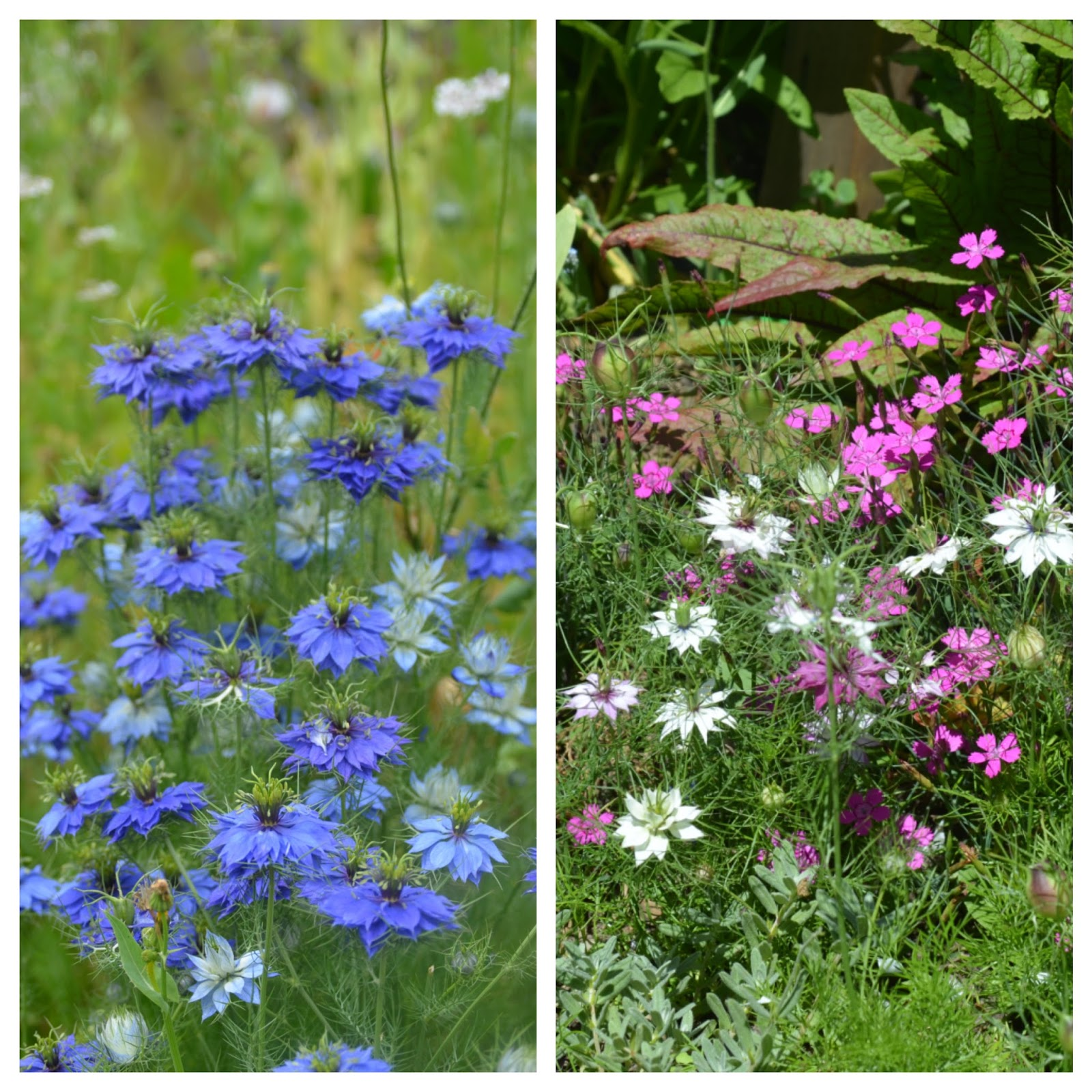 "When Is The Latest I Can Sow Hardy Annuals In Autumn?"" – Higgledy ..."