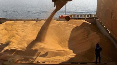 Brasil deve ter safra de grãos com mais de 228 milhões de toneladas, aponta estudo da Conab