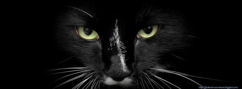 une photo de couverture facebook le beau chat noir. Black Bedroom Furniture Sets. Home Design Ideas