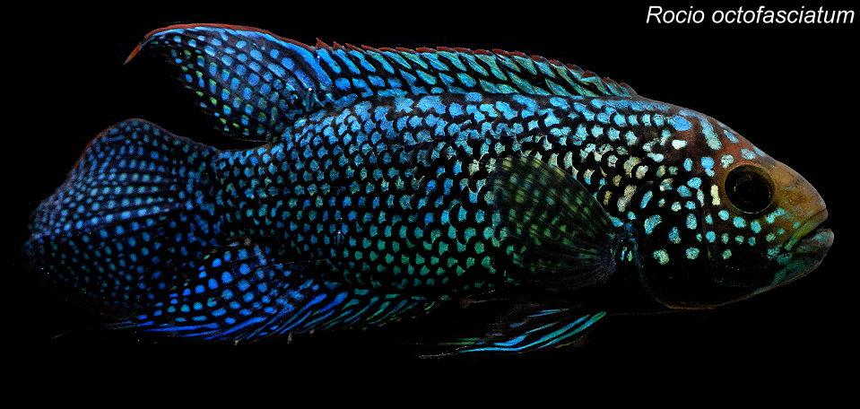 奇獸飼育學: 2012-05-04新進魚隻