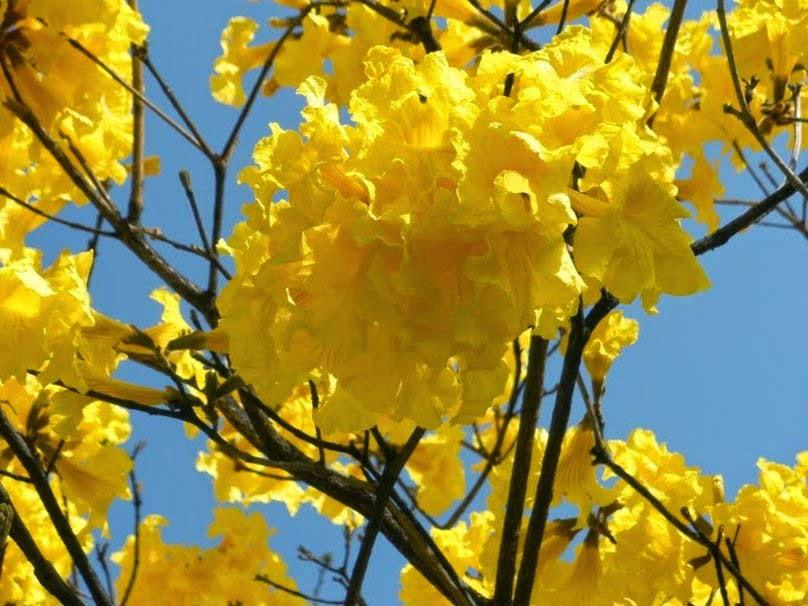 spring-blooming-flowers