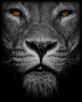 Resultado de imagen de la chica del león negro