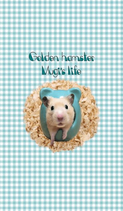 Golden hamster Mugi's life