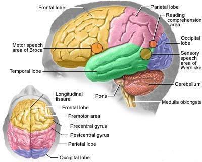 Segala Jenis Penyakit Berawal Dari Otak Seperti Meningitis