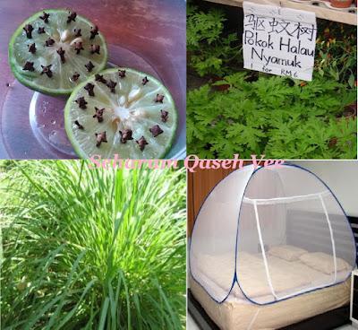 Buat Sendiri Di Rumah : Halau Nyamuk Dengan Mudah Tanpa Penyembur