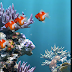 Example Aquarium Live Wallpaper on Android - Live Wallpaper Android