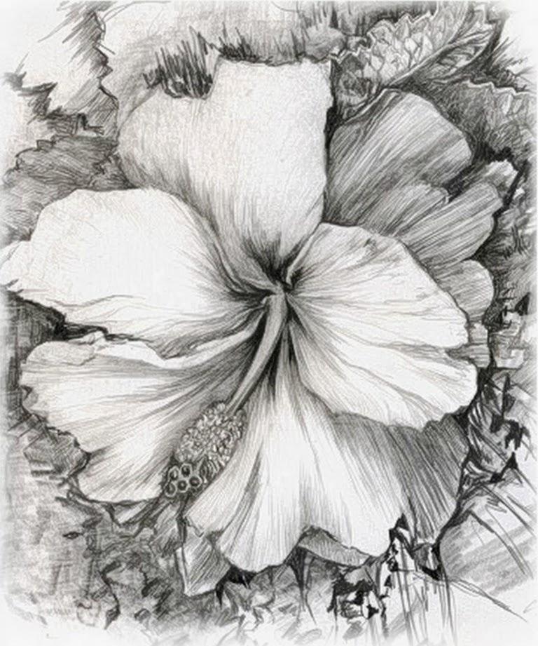 Pintura Moderna Y Fotografia Artistica Dibujos A Lapiz De Pajaros