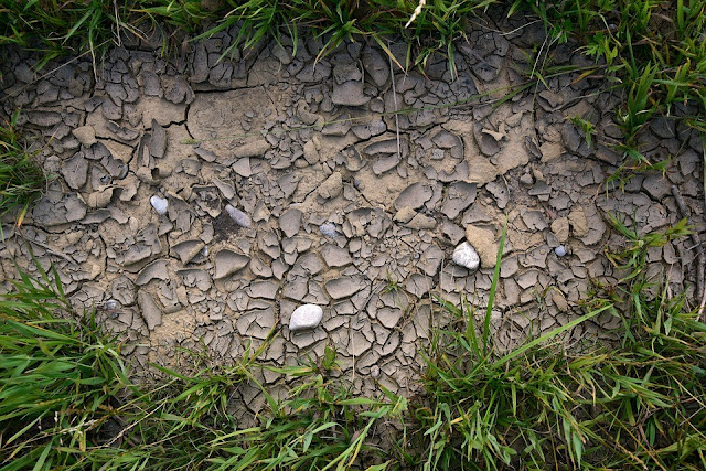 Heatwave and climate change having negative impact on our soil say experts