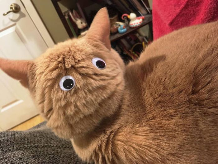 Funny cats - part 261, funny cat pic, cute cat image