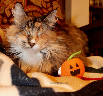 Lucy the blind cat prepares for Halloween