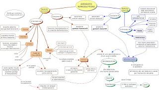 http://www.mappe-scuola.com/2013/11/apparato-riproduttore.html