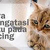 Cara Menghilangkan Kutu Kucing di Rumah Tanpa Harus Ke Dokter