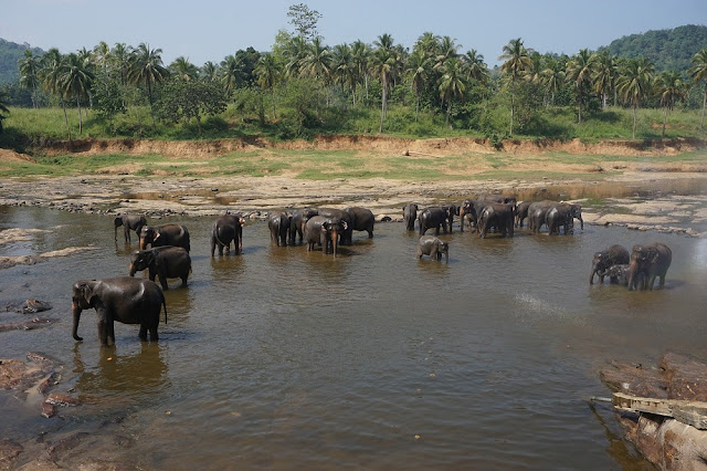 Elephants Udawalawe National Park Sri Lanka