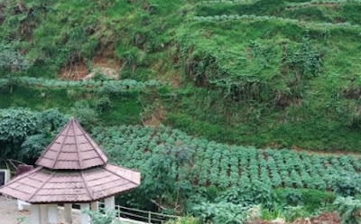 empat Wisata di Wonosobo Yang Populer dan Keren Banget