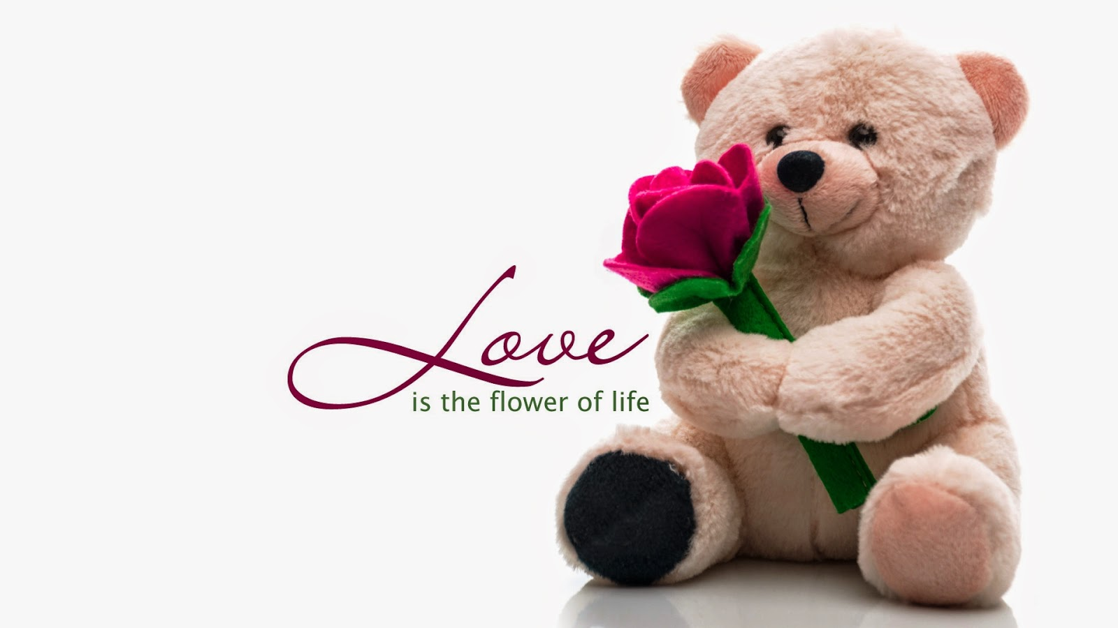 teddy day for love