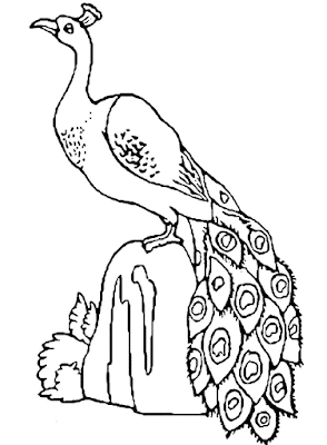 Gambar Mewarnai Burung Merak - 8