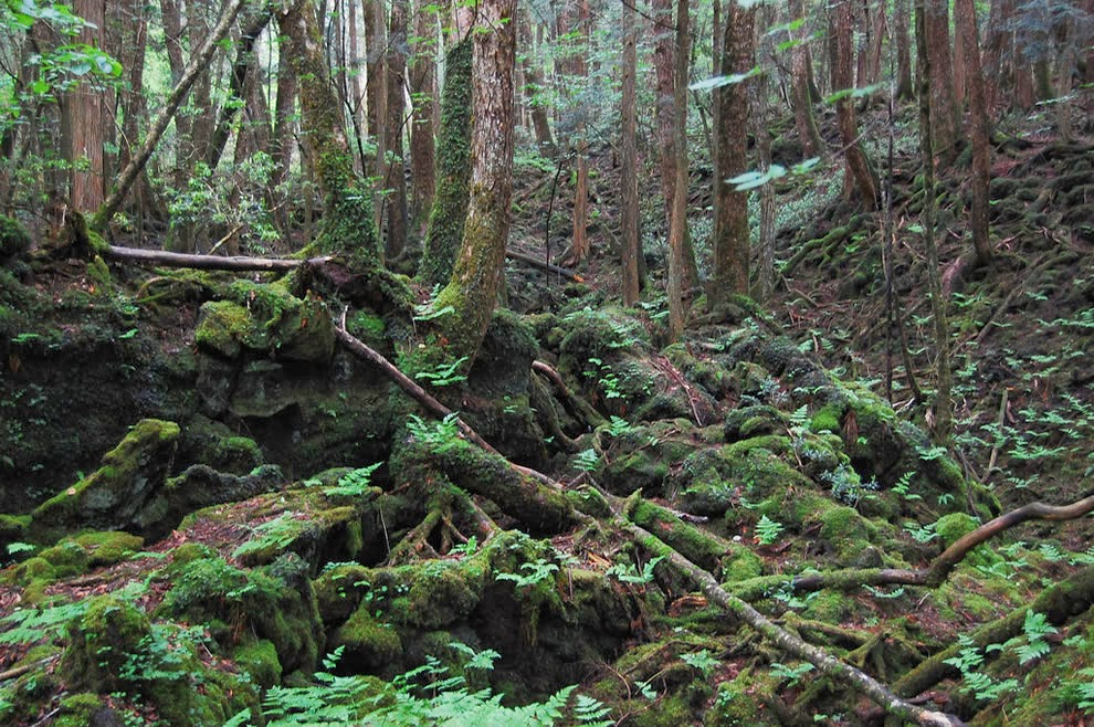 Top 10 Aokigahara Forest Stories About The Haunted Forest – Desenhos