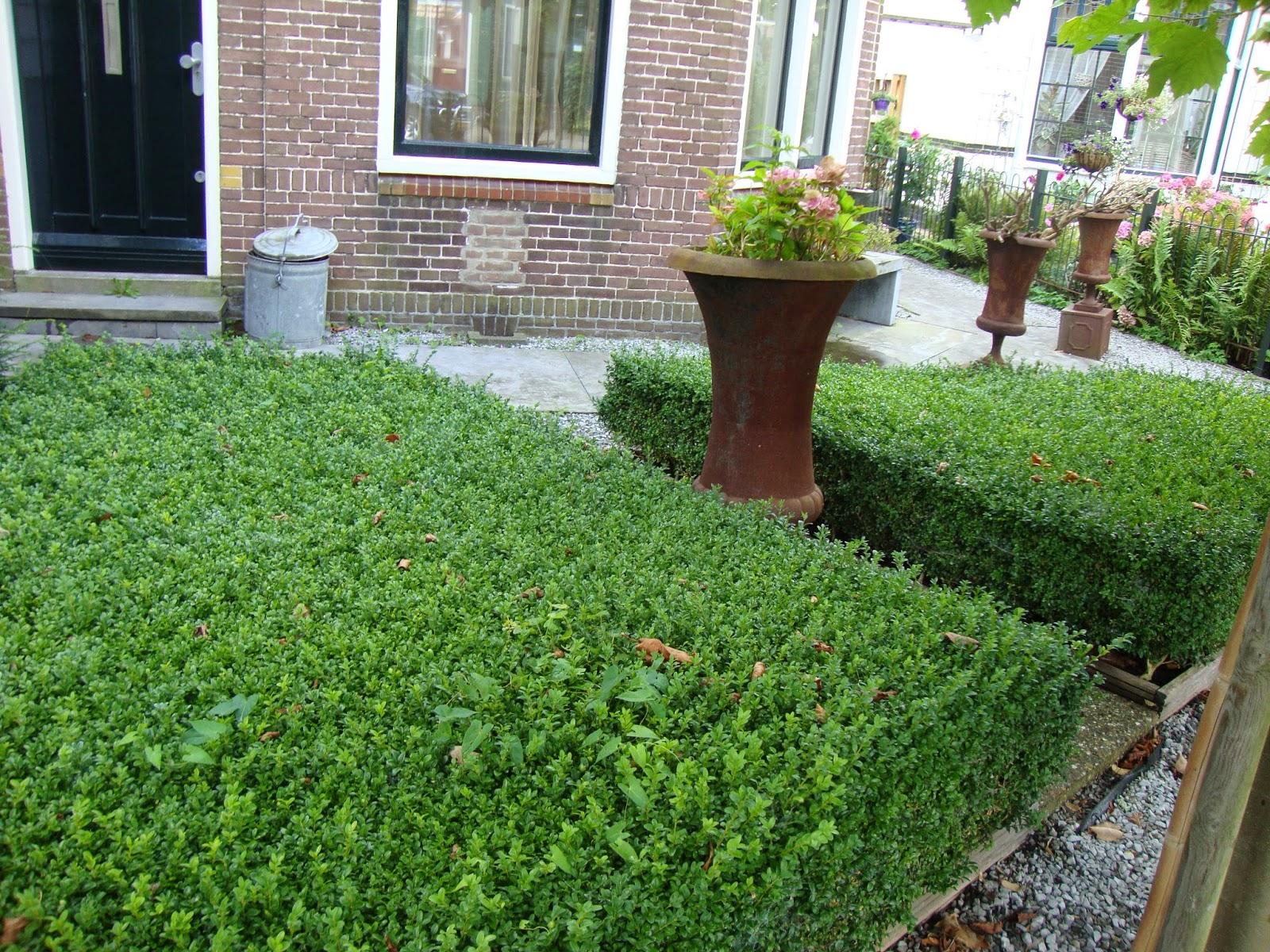 Piccoli giardini olandesi 2 for Immagini piccoli giardini