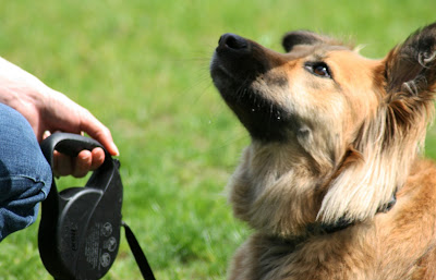 Things You Should Know Before Engaging to Dog Obedience Training