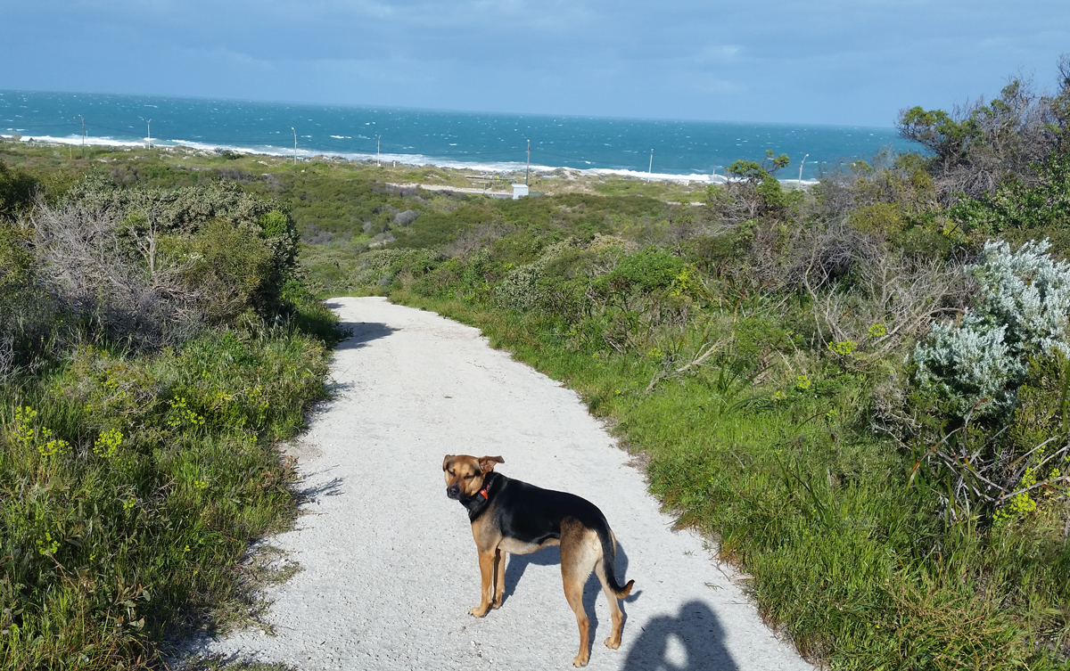 Dogs On Auckland Beaches
