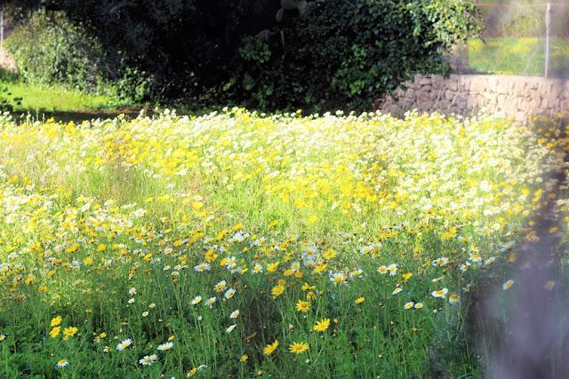 Fleur et Fatale Blog Reisebericht über Mallorca