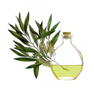 remedios caseros arbol de te para tratar cistitis