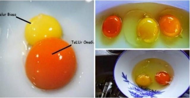 Cara Membedakan Telur Ayam Sehat Dan yang Tidak Sehat.