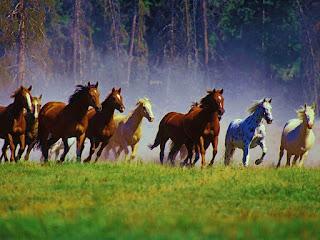 Ngựa Hoang