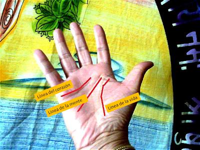Las tres lineas principales de las Manos: Vida, Corazón y Mente