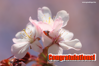 congratulations flowers Images greetings wishes