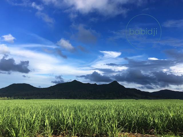 champ de canne à sucre devant des montagne au centre de l'ile maurice