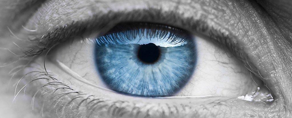 أمل جديد لفاقدي البصر في الخلايا الجذعية