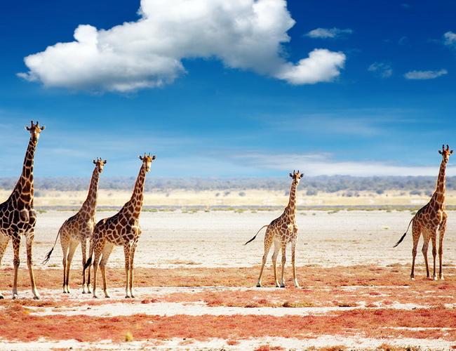 Xvlor Etosha National Park is wildlife ring of 22,270 sq km in Etosha pan