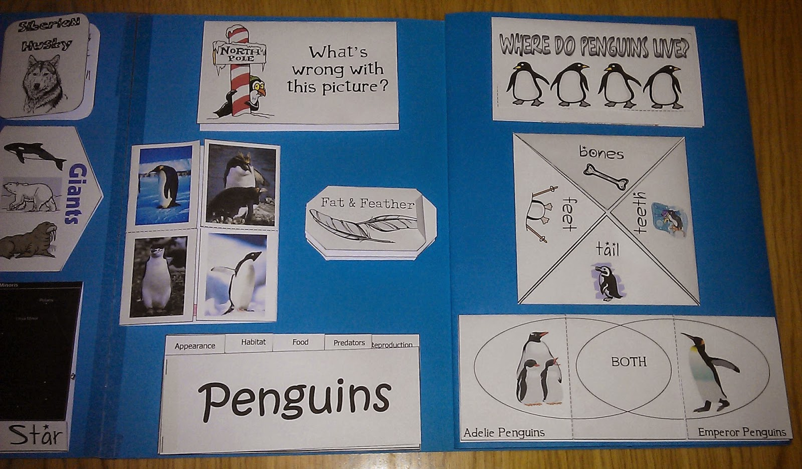 Iman S Home School Polar Animals Lapbook