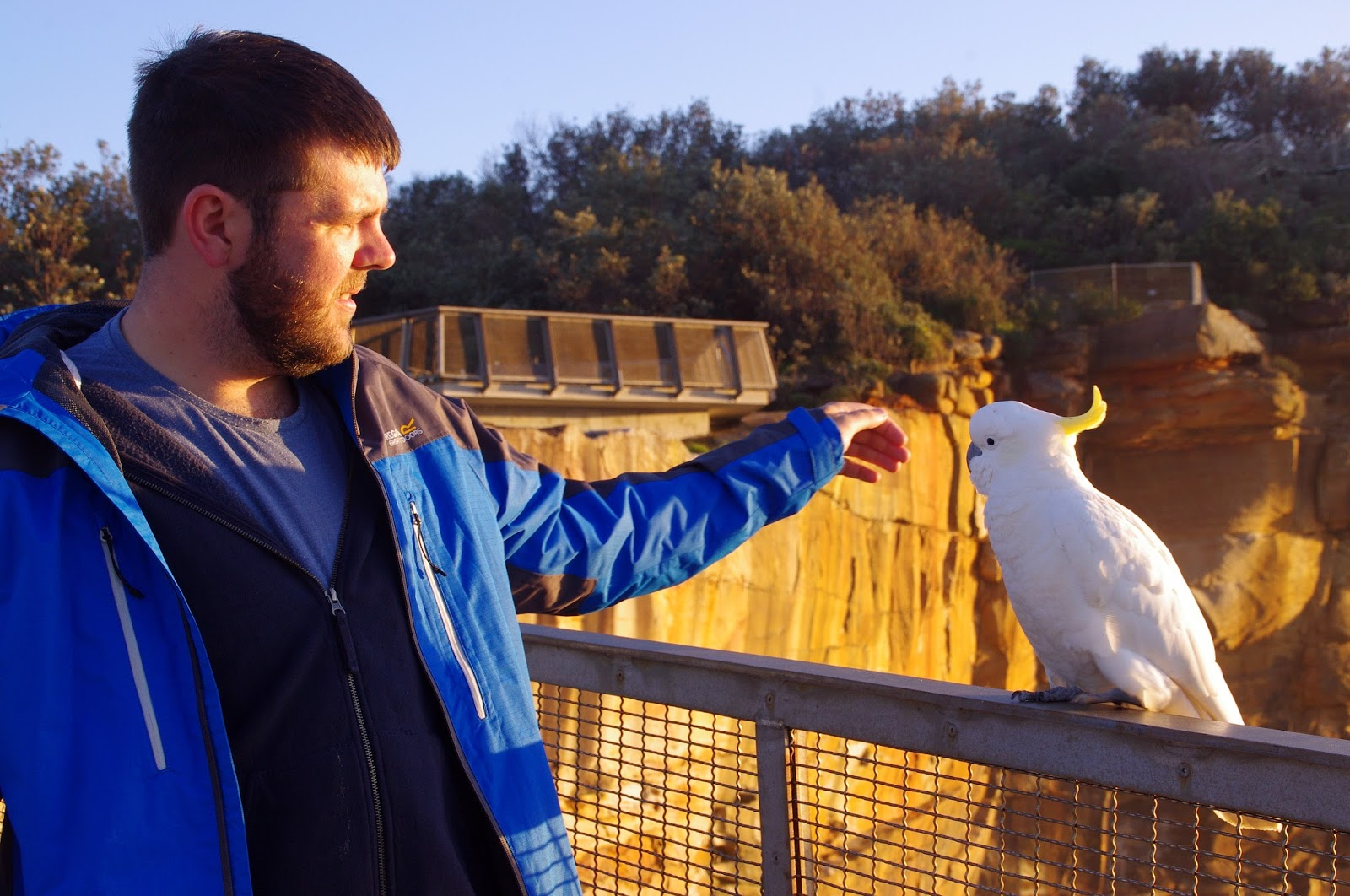 dan with a cockatoo in Sydney harbour national park