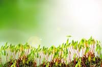 Semintele-germinate-ajutor-in tratarea-cancerului