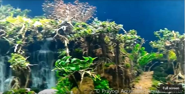 hồ thủy sinh suối thác đẹp không tưởng