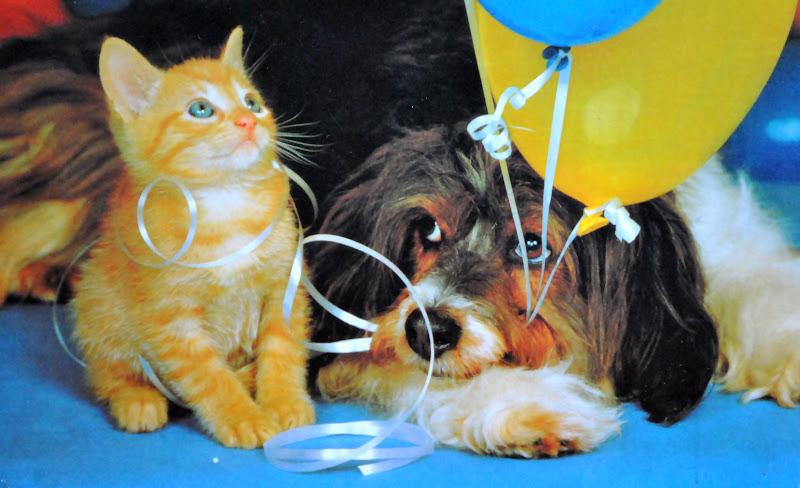pies i kot razem