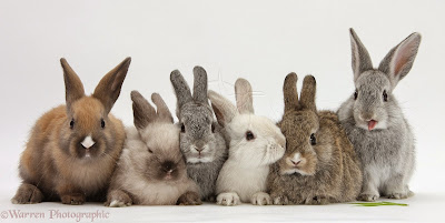 Image result for bunch of bunnies