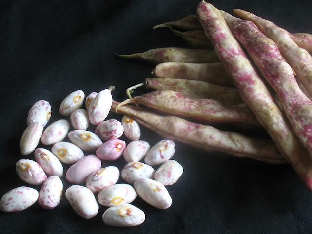 fresh cranberry beans
