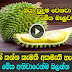 Interesting Facts About Durian - Sinhala Review