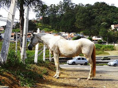 A dez metros da fábrica Cecilia Dale, um cavalo branco