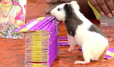 Can You Earn With a Rat and a Parrot? Meet Rat Astrologer Kumar-Funny Business