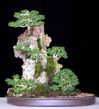 Bonsai Care: What to consider when looking after your plants.