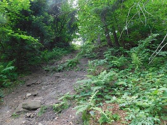 Końcowy, najbardziej stromy fragment podejścia na grzbiet pasma Żurawnicy.