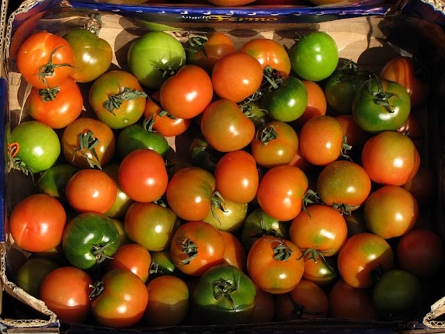 Crate of tomatoes, via Magenta, Livorno