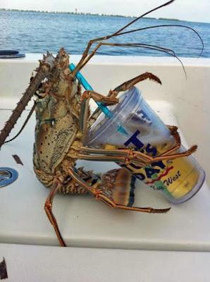 Sonne, Meer und Bier - Krabbe trinkt Bier